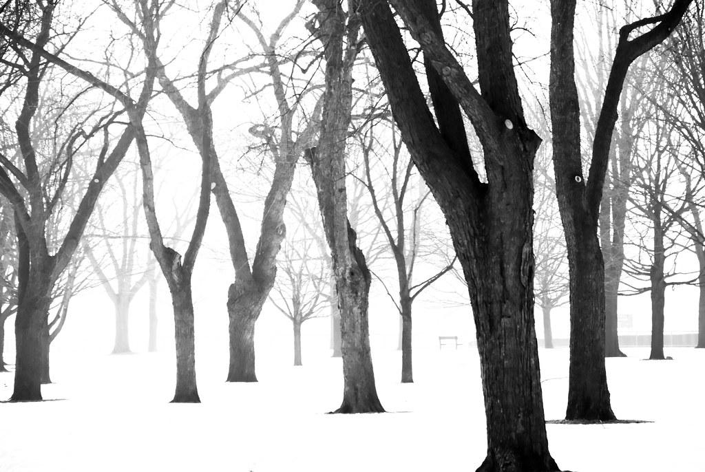 TreesMisc-0174.jpg