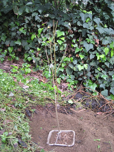 just-planted peach