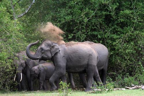 elephant-mudbath