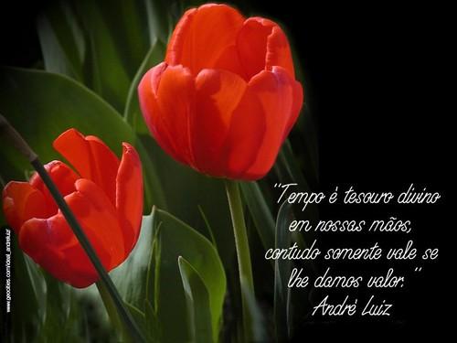 Tempo é tesouro divino em nossas mãos... André Luiz