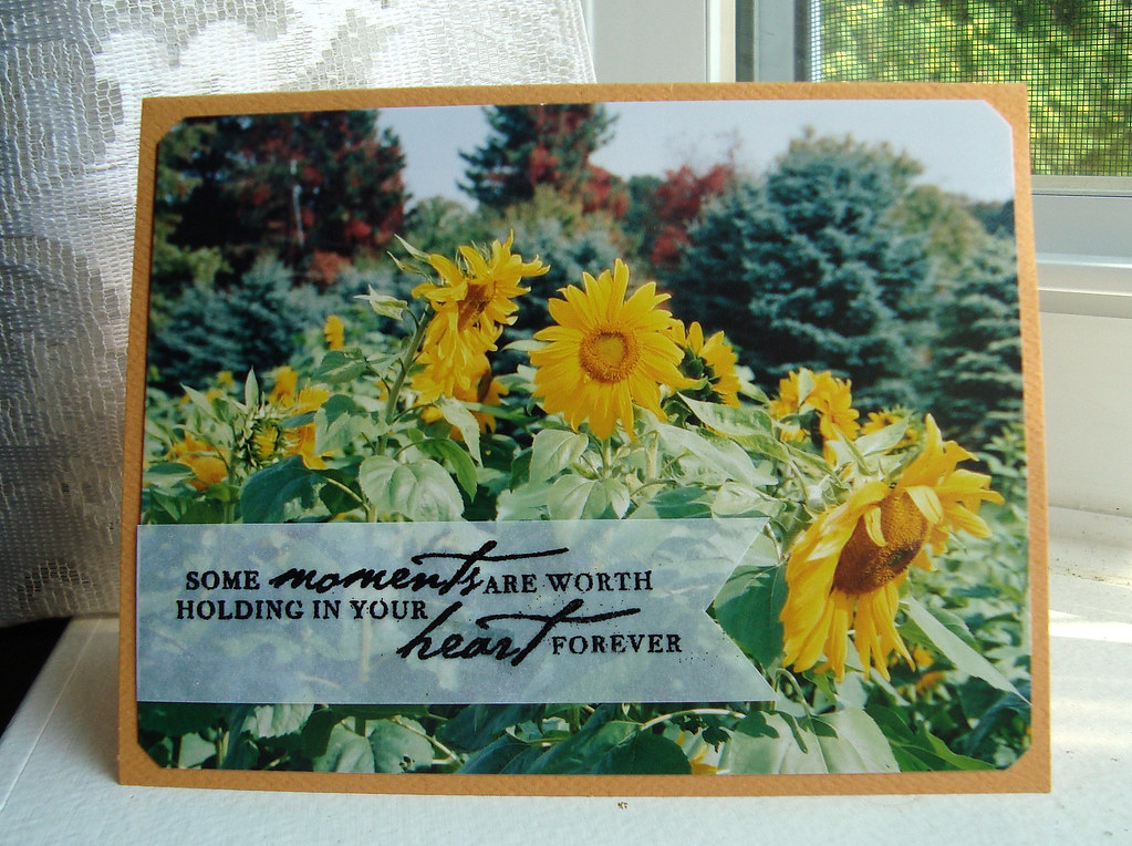 Sunflowers- Photo Cards July 1 09