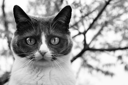 kitty backyard bw
