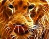 Hổ hay Sư tử   5 (anhducday) Tags: hay vui sư tử hổ ảnhlạ