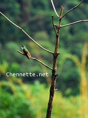 Hummingbird on tree