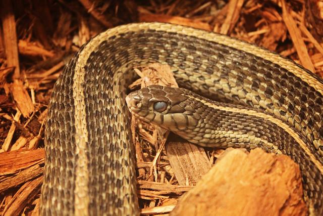 MODS snake
