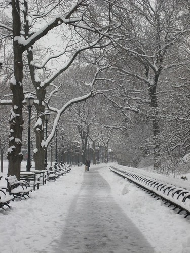 Picture 1: A Snowy Day in New York City