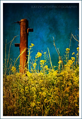 yellow wildflowers at Megiddo (eatzycath) Tags: texture yellow israel pillar rusty bluesky wildflowers megiddo nikond200 18200mmf3556gvr