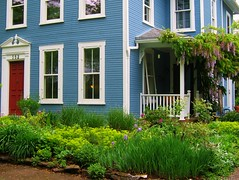Blue House and Springtime Garden in Yellow Springs, Ohio (UGArdener) Tags: blue iris ohio green spring reddoor euphorbia wisteria springtime yellowspringsohio sidestreets antiochuniversity springtimeinohio