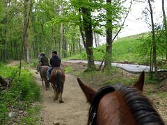 Horseback Riding in the Dells