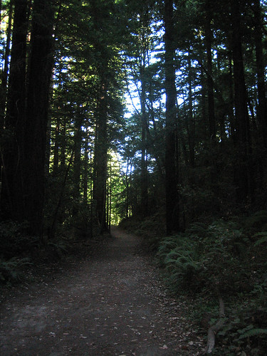 Waddell Creek Trail