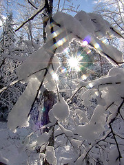 05-0830 Sun shining through snow covered branches in Upper Michigan woods (darylann) Tags: winter snow up scenery snowy michigan scenic northamerica upnorth winterlandscape wintery winterscene uppermichigan northernmichigan absolutemichigan amazingmich darylannanderson darylannandersonphotography wwwdarylanncom