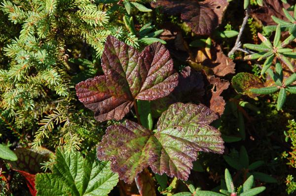 leaf_0154
