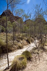 Bungle Bungles (C) 2008