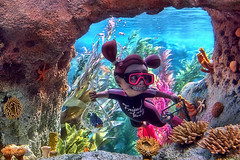 Disney - Finding Nemo Submarine Voyage - LOOK OUT...!  IT'S DARLA!! (Explored) (Express Monorail) Tags: california usa sunlight motion wet water colors movie wonder geotagged moving interestingness colorful nemo ride availablelight disneyland character magic details sigma kingdom wed disney mickey fantasy pixar saturation mickeymouse animation imagine theme imagination mean wish orangecounty anaheim walt tomorrowland magical darla dl dlr themepark magickingdom menace findingnemo attractions cartooncharacter subs waltdisney underthesea wdi disneylandresort imagineering disneycharacter disneymovie flickrexplore waltdisneypictures explored pixaranimationstudios disneyparks expressmonorail findingnemosubmarinevoyage disneyride waltdisneyimagineering waltereliasdisney paintshopprophotox2 disneyphotochallenge joepenniston disneyphotography friendofthereef geo:lat=33812983 geo:lon=117917365 letsspellwonderland