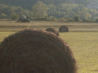 Autumn cutting WearsValley Tennessee by Valley voice News