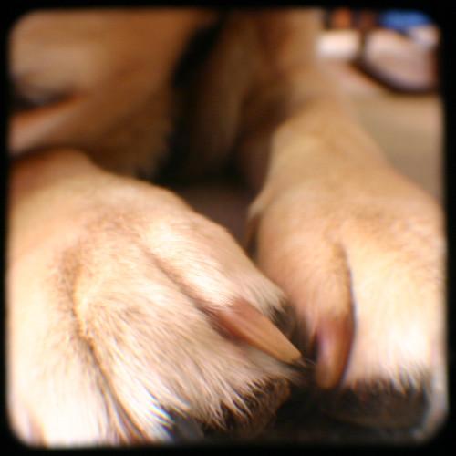 Maya toes