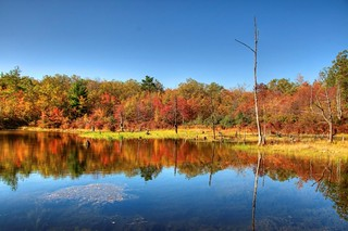 Reflection Pond: Autumn comes to Maryland