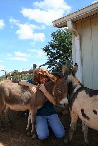Miniature Donkeys and Katrina