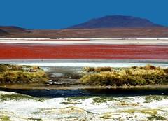 Laguna rossa - Red lagoon (Tati@) Tags: red color nature water landscape desert bolivia lagoon adventure highland gesso tati plancton fenicotteri naturesfinest lagunacolorada creazione salares borace abigfave magnesio colorphotoaward theunforgettablepictures theunforgettablepicture diatomee