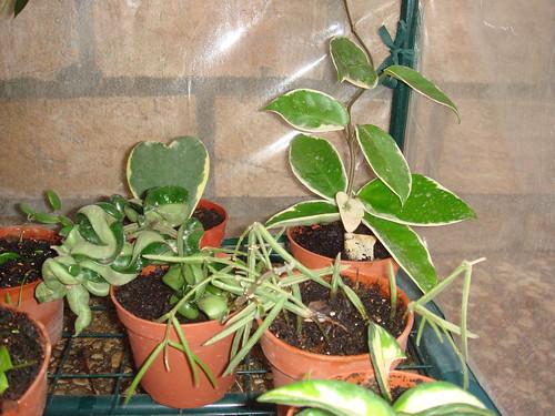 Mis plantas y sus flores 2954808537_a713c662f3