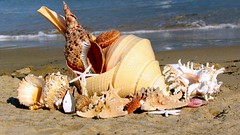 Gifts from the sea... (juntos ( MOSTLY OFF)) Tags: friends sea me seashells shell gifts chapeau xo soe godscreations pictureperfect bestofflickr musictomyeyes gbr firstquality supershot theoldport flickrsbest golddragon mywinners abigfave diamondheart platinumphoto visiongroup blueribbonaward flickrdiamonds crystalawards ysplix heartsawards flickrshearts theunforgettablepictures brillianteyejewels overtheexcellence goldsealofquality platiniumphotography betterthangood theperfectphotographer amazeandbeamazed imaginepoetry spiritofphotography multimegashot qualitypixels damniwishidtakenthat damniwishihadtakenthat photographersgonewild michelangelosbox extraordinaryphotography obq vision100 oraclex justproject worldsdazzilingshots highqualitypictures reflectyourworld naturescreations lesamiesdupetitprince saariysqualitypictures novavitagroup dirhenryandco stunningplanetshot thoughtsbytheocean