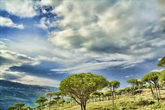 PineLand (A. Saleh) Tags: lebanon nature clouds nikon edited d200 hdr topaz saleh asaad pineland hammana wwwasaadsalehcom