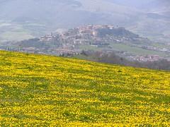 Girasoli in festa (giaconet) Tags: primavera paesaggio contrasto
