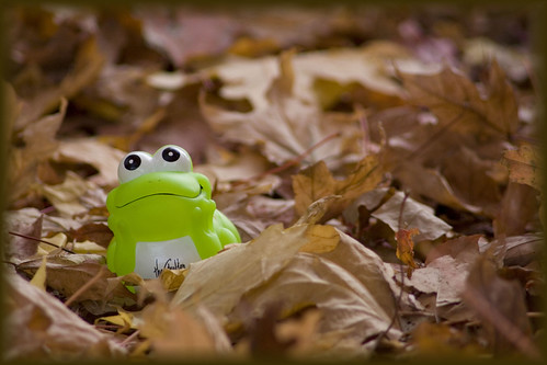froggy in the fall