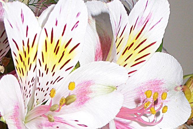 fleurs-cu-70572