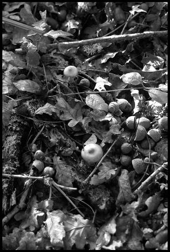 Portada de otoño.fall's cover