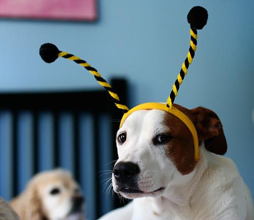 Lucy Bumblebee 1