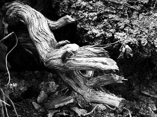 essay on ansel adams photography