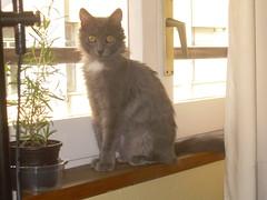 Moni en la ventana (Jota CC) Tags: ventana gato gatita