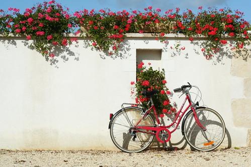 Vélo rouge de maman et geranium rouges