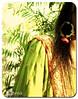 Winters bring Happiness... (д§mд) Tags: flowers pakistan cold green colors glow girly events blingbling dreams passion romantic chilly nightshots shaadi weddings reds songs mehndi mellow bangles islamabad glitters mybestfriend asma feminish dholki fulloflife desifashion noreservation girlishstuff colorfuldreams allthingsgirls desishadiyan iheartsinging yuptheshadiseasonisonitspeakhere punjabisongsontopofurvoice tappay maahiyay memoriesthatlast girlishcraziness mehndisaresomuchfun ahharedgharara lalgharara baalay flowerjewelery wintersarehereatitsfullbloom heatersareout sardiyaaan islamabadswintersareunmatchable