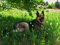 Mina al fresco! (osky-(Argentina)) Tags: argentina buenosaires mina mascota perra oskygimenez oskylandia