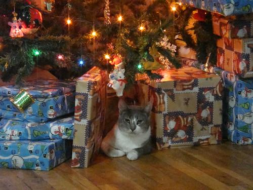 Krismas Kitty (3)