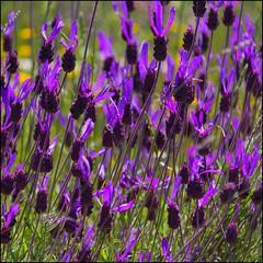 Paz - Peace (Pilar Azaa Taln ) Tags: espaa color luz