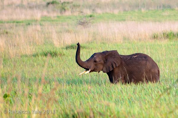 RYALE_Rwanda_Uganda_Safari-269