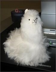 My new mascot, Al
