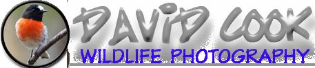 David Cook Wildlife Photography
