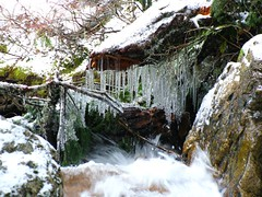 Creek Icicles