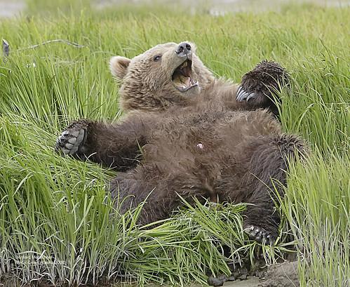 Yawning Cub_IMG_5001