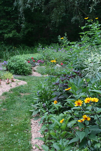 heliopsis bed