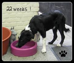 22 weken oud !