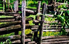 =!!= (Edison Zanatto) Tags: brazil naturaleza southamerica nature brasil natureza natur cerca nikonn90s americadosul sdamerika fujicolorprovalue200 filme35mm continentesulamericano edisonzanatto