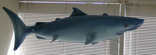 Emergent Product-Management Shark (Profile)