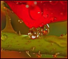 ~Dew Droppin Skyler~