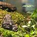 toad terrarium
