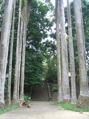 這還是在公園裡面喔…這公園裡面有森林步道呢。